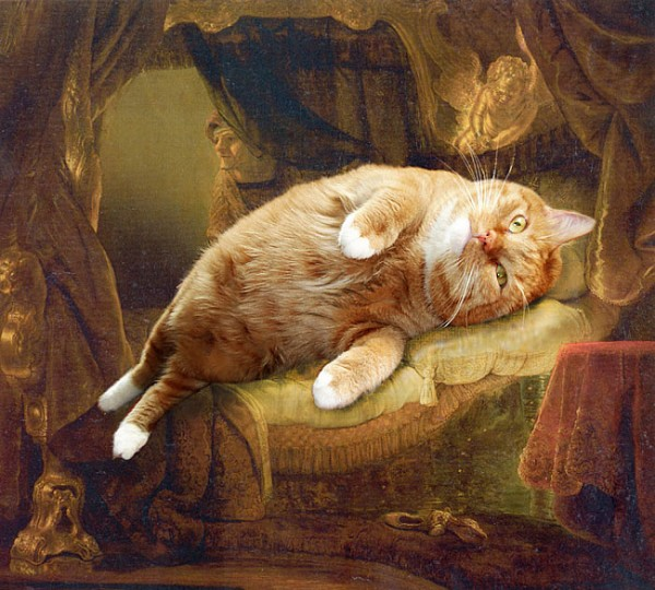 Cat-Zarathustra-picture-23.jpg