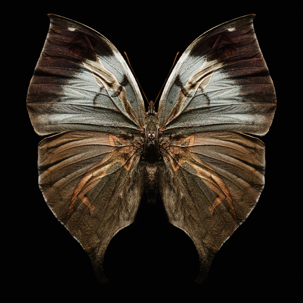 butterfly_wings_3.jpg
