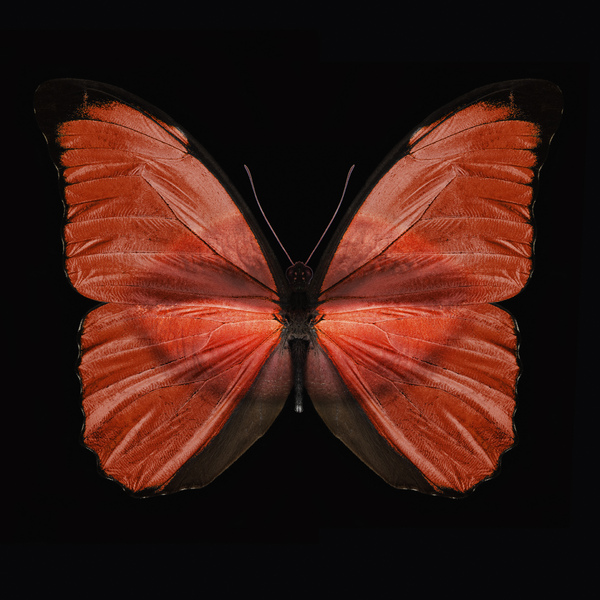 butterfly_wings_7.jpg